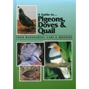 A guide to pigeons, doves & quail
