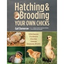 Hatching & Brooding your own Chicks / Damerow